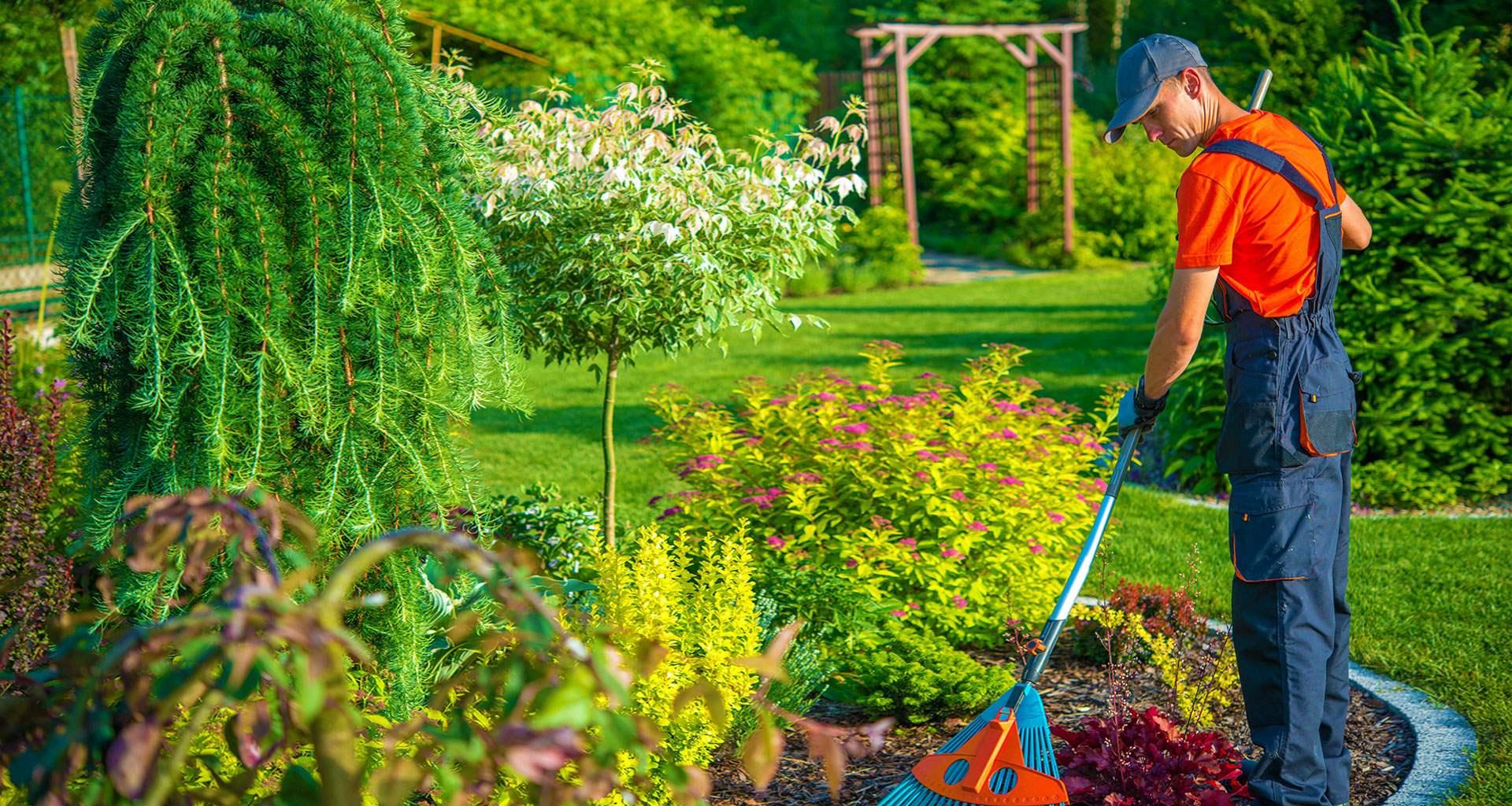 jardineria mallorca servicios